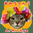 Tabby cat Amichan 2