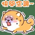 柴犬小Q夏日篇