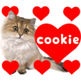 Persian cat cookie kitten PhotoSticker