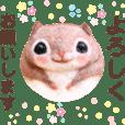 yuriCo.momo