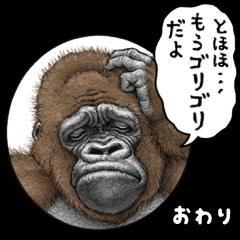 Gorilla gorilla 9