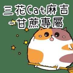 三花CAT麻吉貓-專屬甘蔗篇