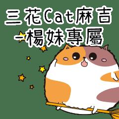 三花CAT麻吉貓-專屬楊妹篇