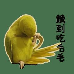 鸚鵡啵派麥P的日常 第三彈彈