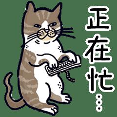 山本貓的私生活