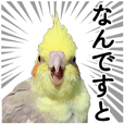 Cockatiel sticker no.01