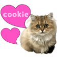 Persian cat cookie kitten PhotoSticker2