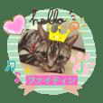 愛猫J日常会話♪