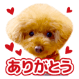 sora toy poodle Sticker 5