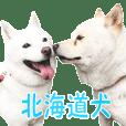 Hokkaido Dog's friends.