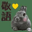 Rabbit photo keigo sticker