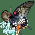 花言蝶語-Part1