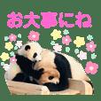 パンダ写真と可愛い仲間達の写真