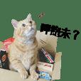 大橘微重-爽貓丸子的日常