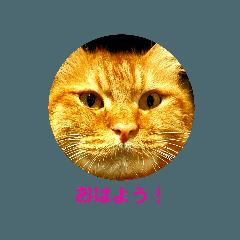 Ruru510