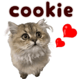 Persian cat cookie kitten PhotoSticke3