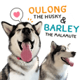 Oulong the Husky & Barley the Malamute