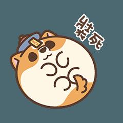 米犬日常 - 阿飄涼爽篇2