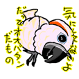 Gen san parrot