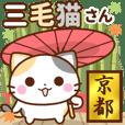 京都の三毛猫さん