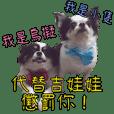 Chihuahua Uni's family