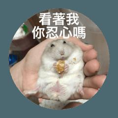 我的倉鼠生活