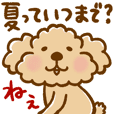 Putaro the Poodle Summer and autumn
