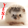 Hedgehog Zunda