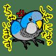 Gen san parrots 3