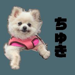 sakumaru_20190816