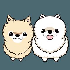 Twin Pomeranian Nana and Hana