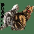 猫でも使えるスタンプ
