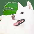 I love Hokkaido Dogs
