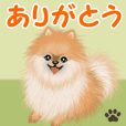 Pomeranian greets2