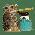 Chibi chii_20190820172432