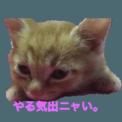RIK TSUKISHIRO