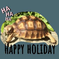 LuLu and tortoise貼圖