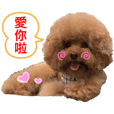 Red Poodle Junior Ouba_3