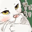 ทิชชู่ แมวน้อยน่ารัก