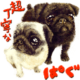 Super polite Pugs Sticker