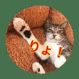 LYSTA cat