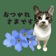 毎日つかえる!猫とお花のスタンプ