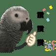 我是灰鸚鵡 我叫搗灰