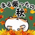Maru shibainu autumn
