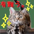 猫カフェキャッチーの日常 2