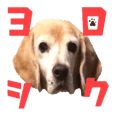 ビーグル犬のベルちゃんスタンプ