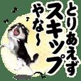 "AZUKI the Chihuahua ""positive thinking"""