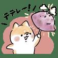 Shiba Inu Dog <autumn 2019>