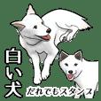 White Dog Sticker-JP-