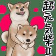 A cheerful Shiba Inu 2